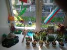 Конкурс «Цветник на окне»